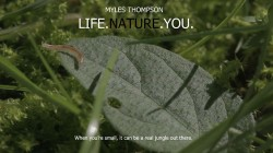 Life Nature You (VIDEO)